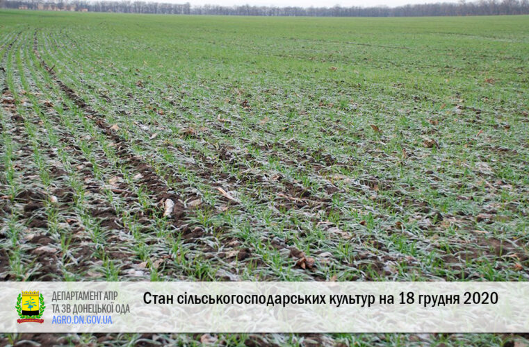 Стан сільськогосподарських культур на 18 грудня 2020