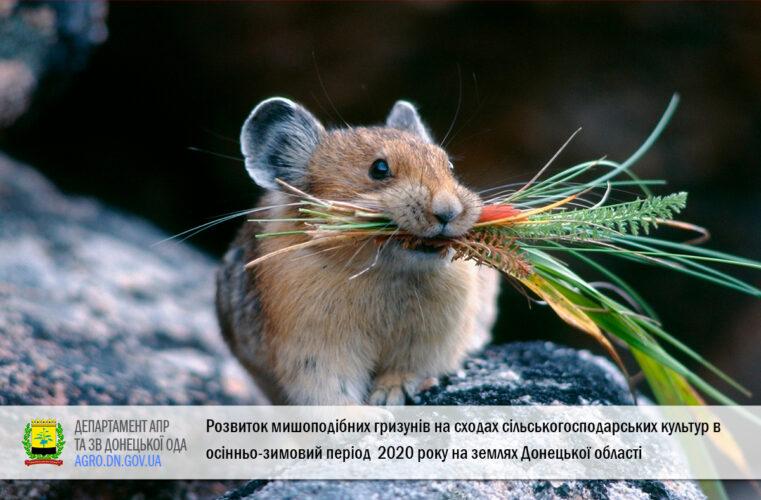 Розвиток мишоподібних гризунів на сходах сільськогосподарських культур в осінньо-зимовий період 2020 року на землях Донецької області