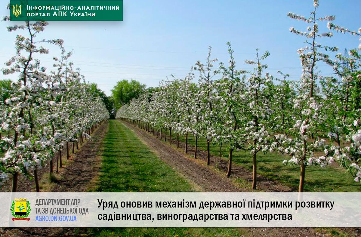 Уряд оновив механізм державної підтримки розвитку садівництва, виноградарства та хмелярства