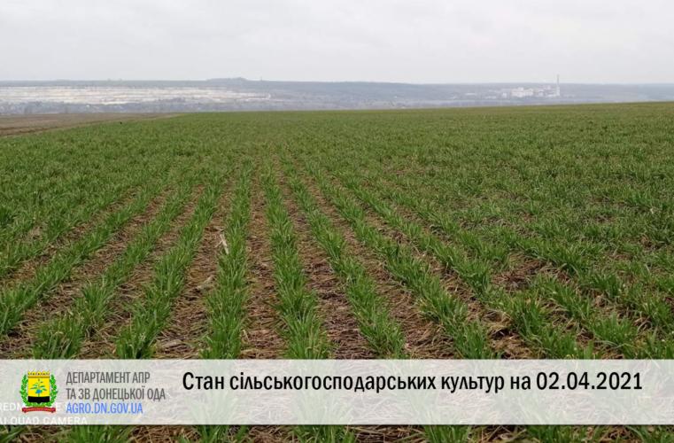 Стан сільськогосподарських культур на 02.04.2021