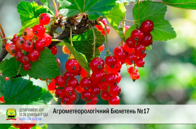 Агрометеорологічний Бюлетень №17 за другу декаду червня 2021 року
