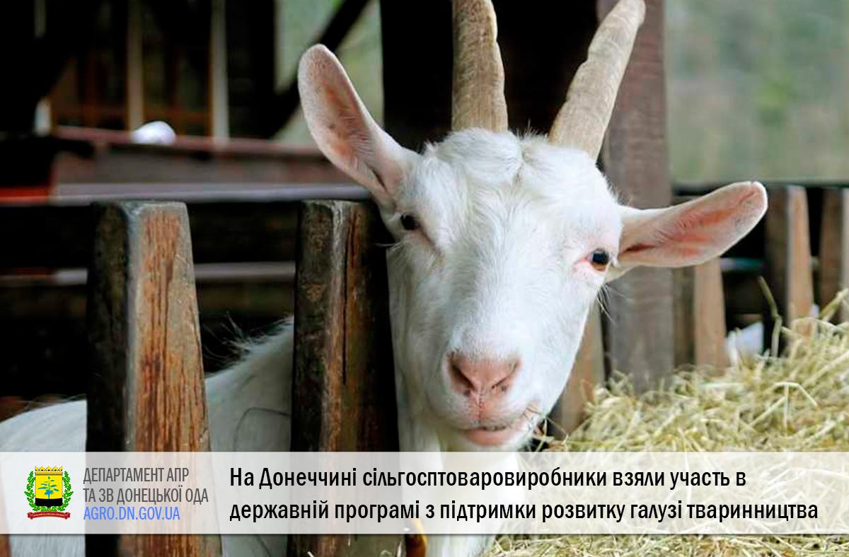 На Донеччині сільгосптоваровиробники взяли участь в державній програмі з підтримки розвитку галузі тваринництва
