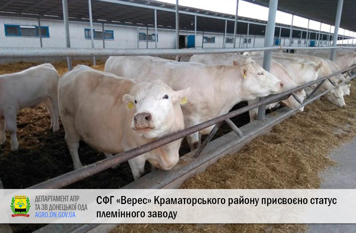 СФГ «Верес» Краматорського району присвоєно статус племінного заводу